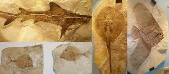 images-fossili-2