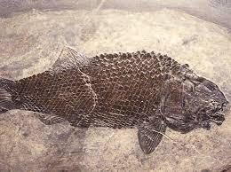 images-fossili