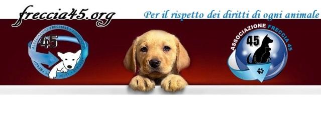 logo-Freccia-453